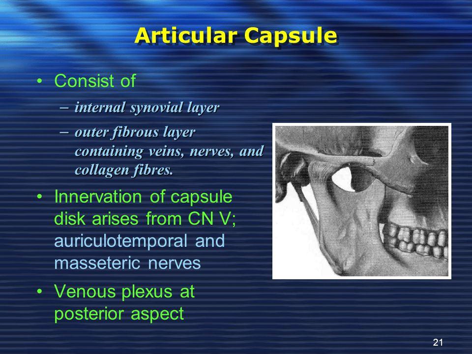Articular Capsule Consist of