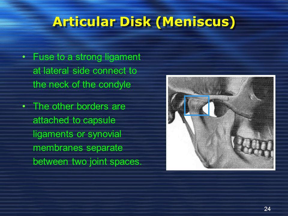 Articular Disk (Meniscus)