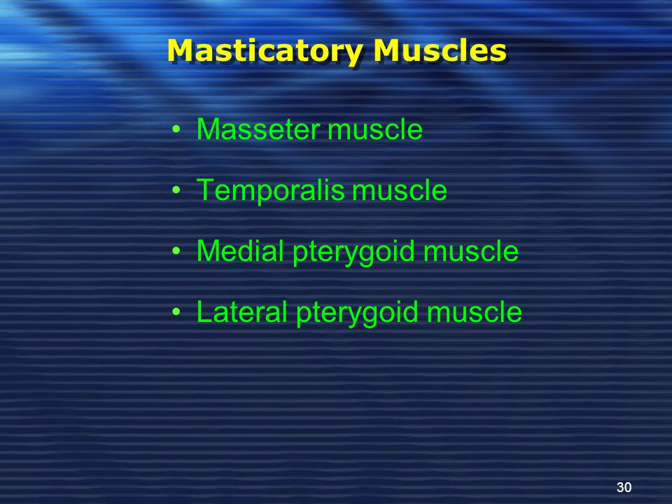 Masticatory Muscles Masseter muscle. Temporalis muscle.