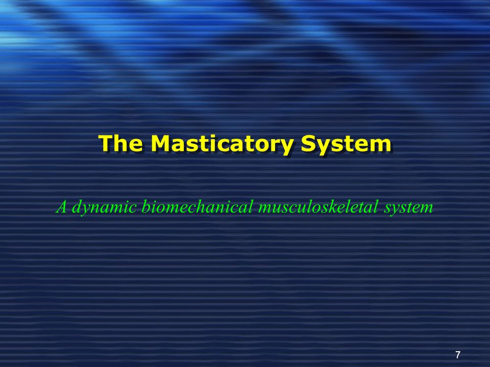 The Masticatory System