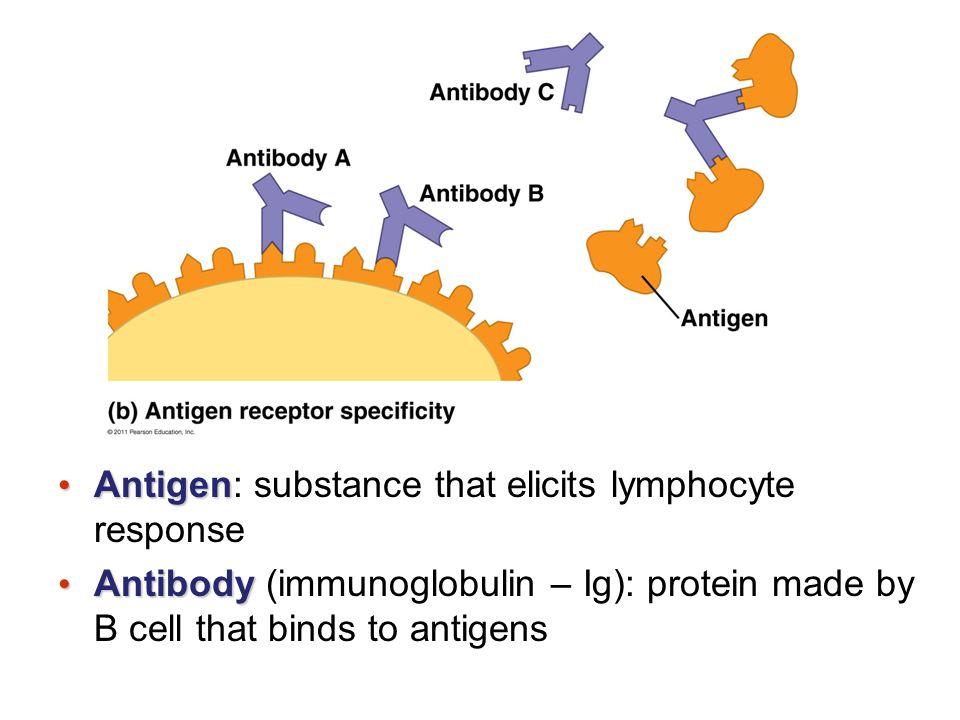 Antigen: substance that elicits lymphocyte response