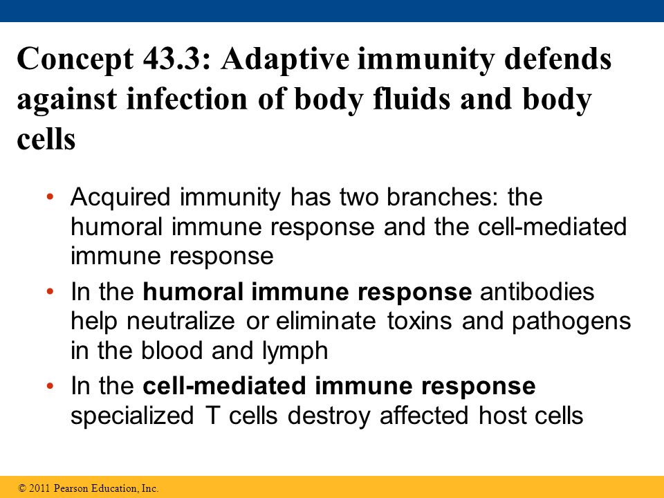 Concept 43.3: Adaptive immunity defends against infection of body fluids and body cells