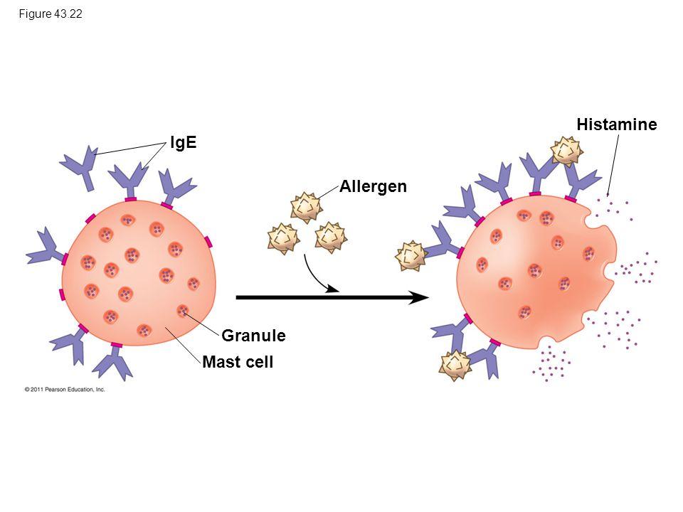 Histamine IgE Allergen Granule Mast cell Figure 43.22
