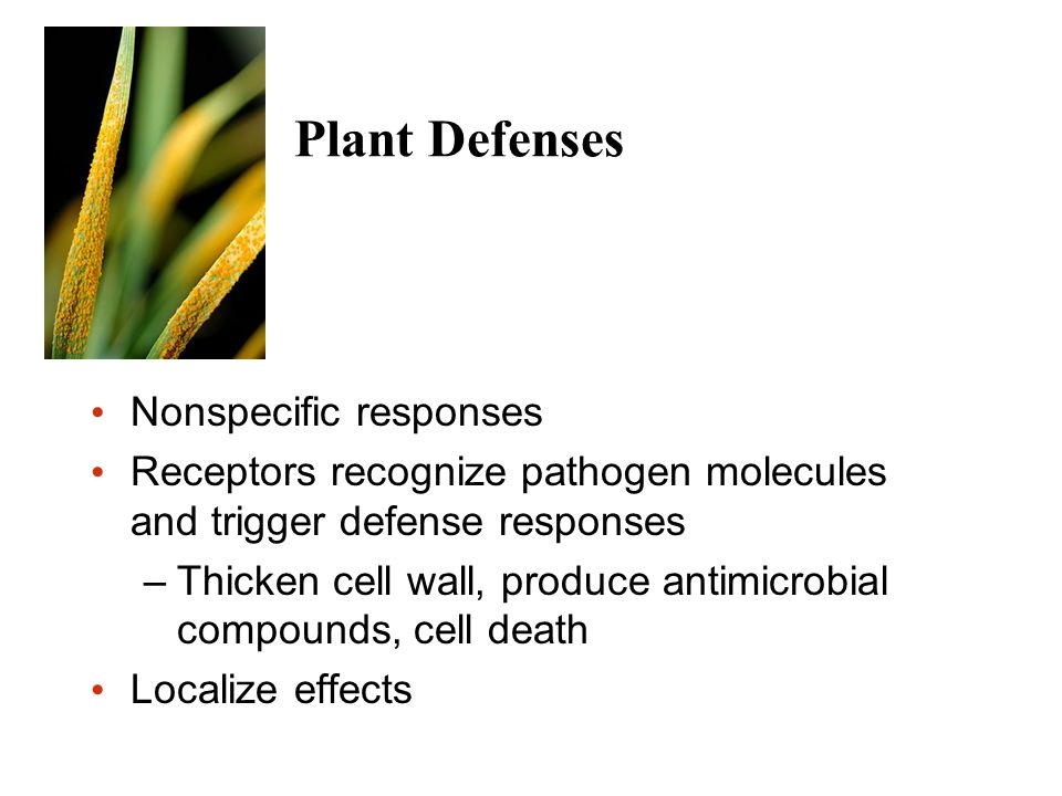 Plant Defenses Nonspecific responses