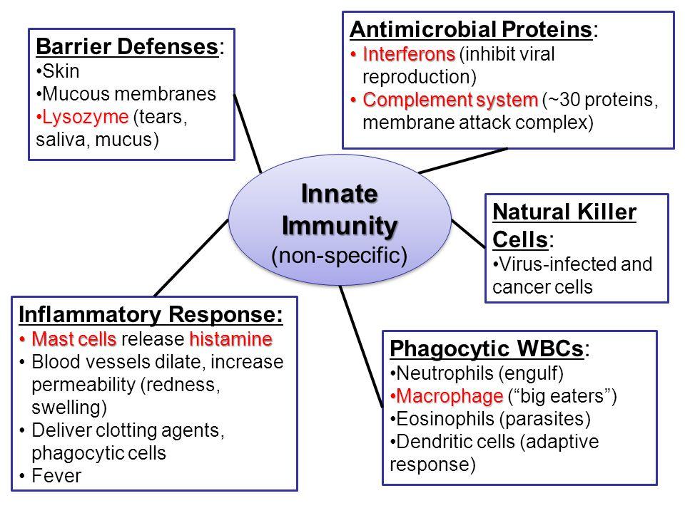 Innate Immunity Antimicrobial Proteins: Barrier Defenses: