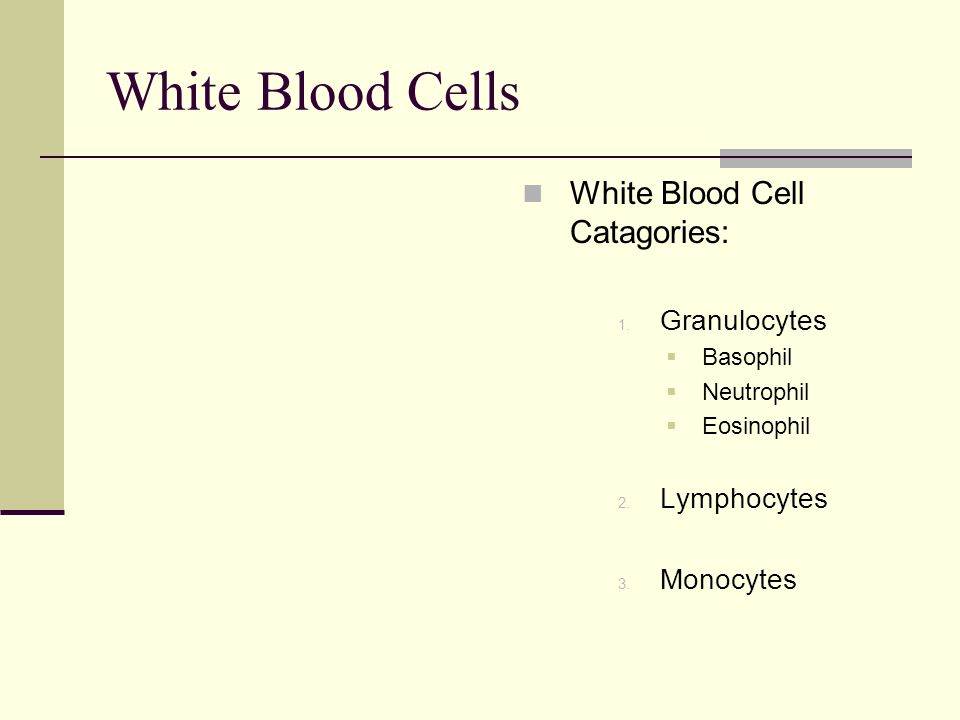 White Blood Cells White Blood Cell Catagories: Granulocytes