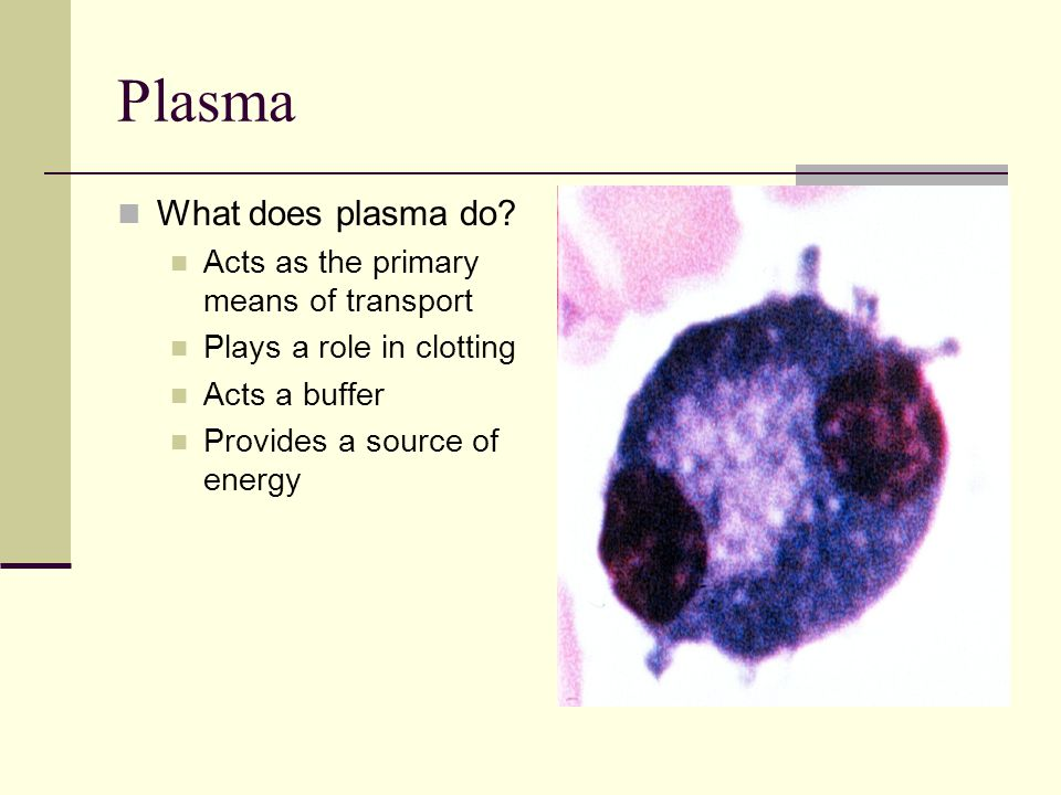 Plasma What does plasma do Acts as the primary means of transport