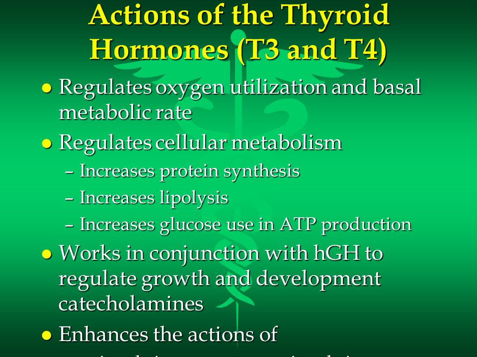 Actions of the Thyroid Hormones (T3 and T4)