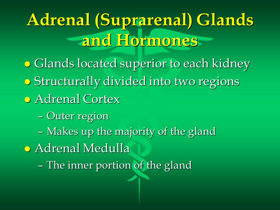 Adrenal (Suprarenal) Glands and Hormones