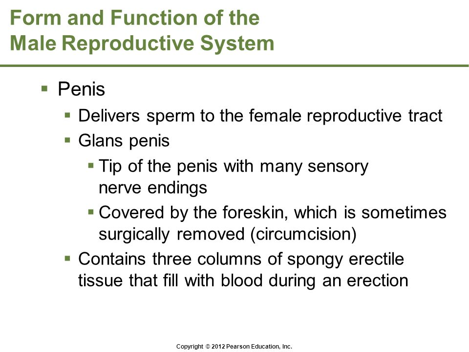 Form and Function of the Male Reproductive System