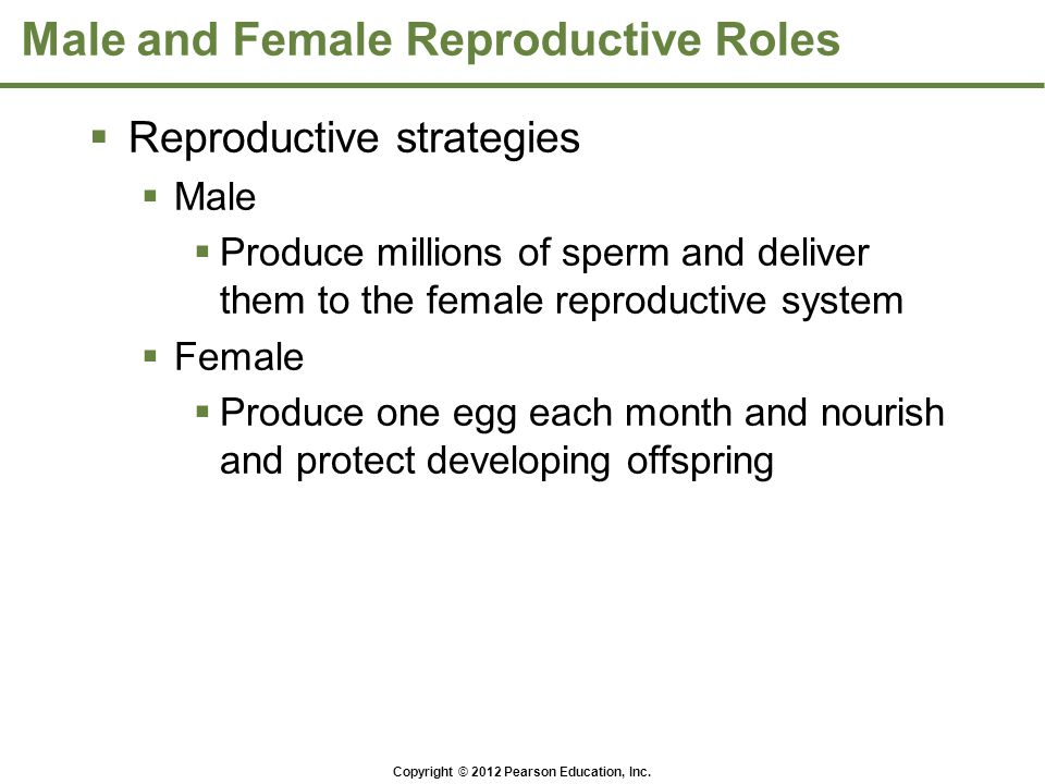Male and Female Reproductive Roles