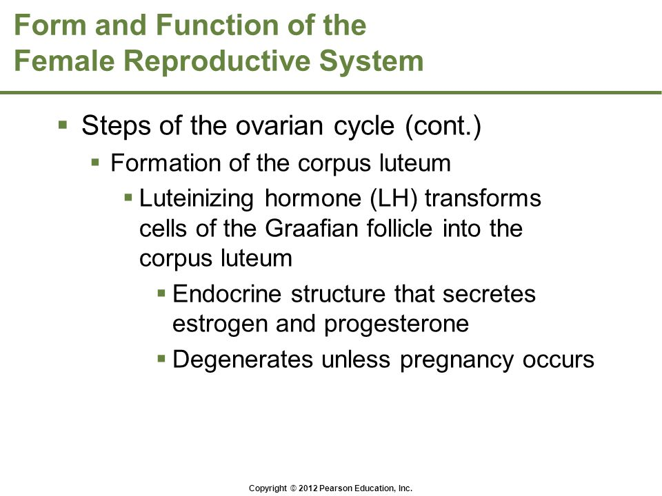 Form and Function of the Female Reproductive System