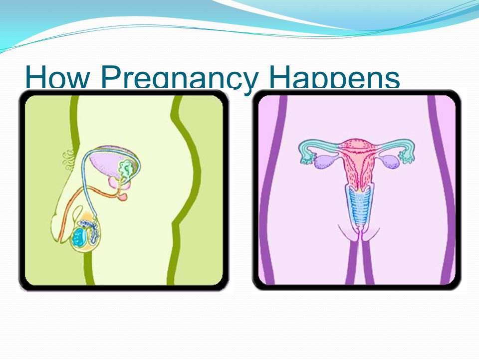 How Pregnancy Happens