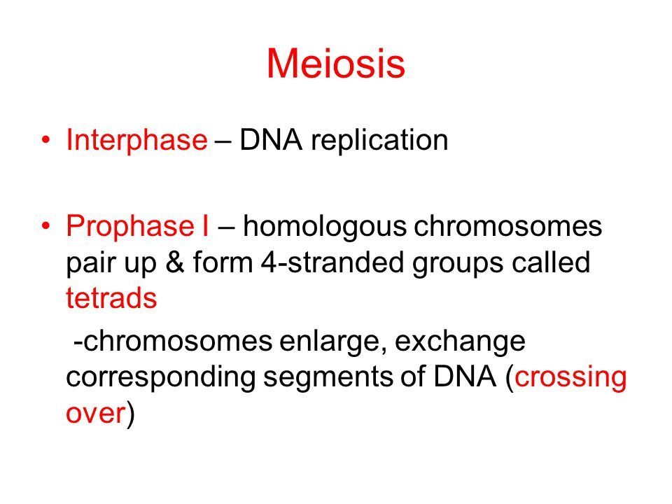 Meiosis Interphase – DNA replication