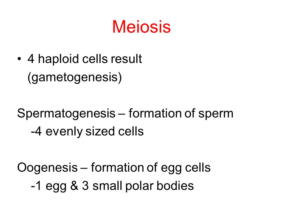 Meiosis 4 haploid cells result (gametogenesis)
