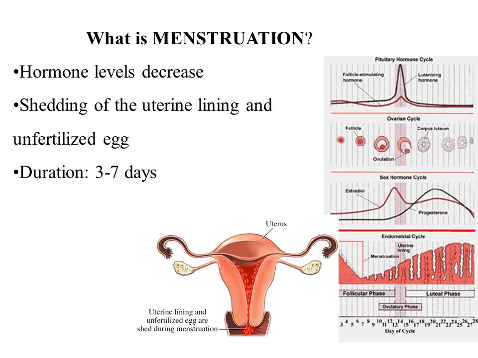 What is MENSTRUATION Hormone levels decrease. Shedding of the uterine lining and. unfertilized egg.