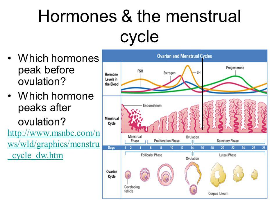 Hormones & the menstrual cycle