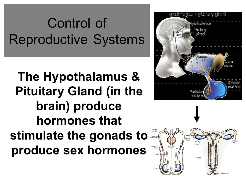 Control of Reproductive Systems