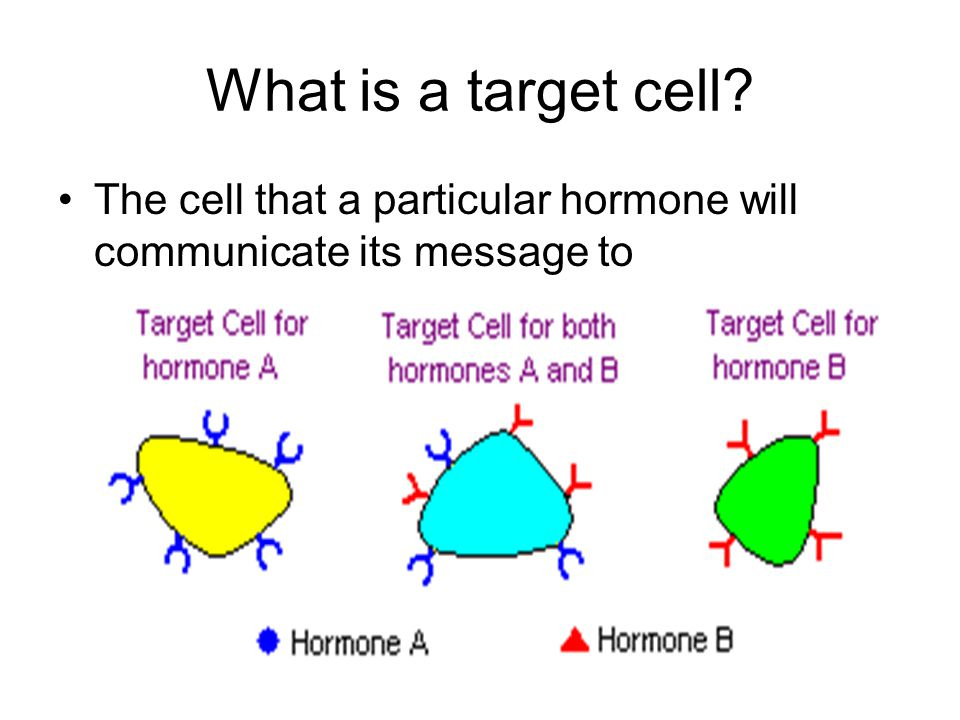 What is a target cell The cell that a particular hormone will communicate its message to