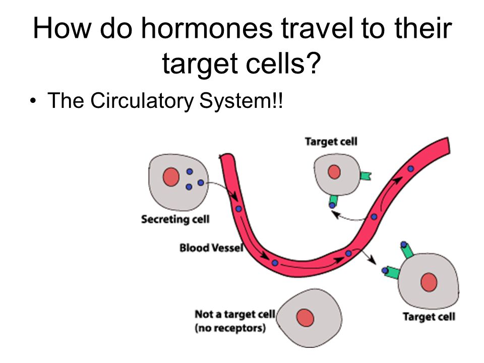 How do hormones travel to their target cells