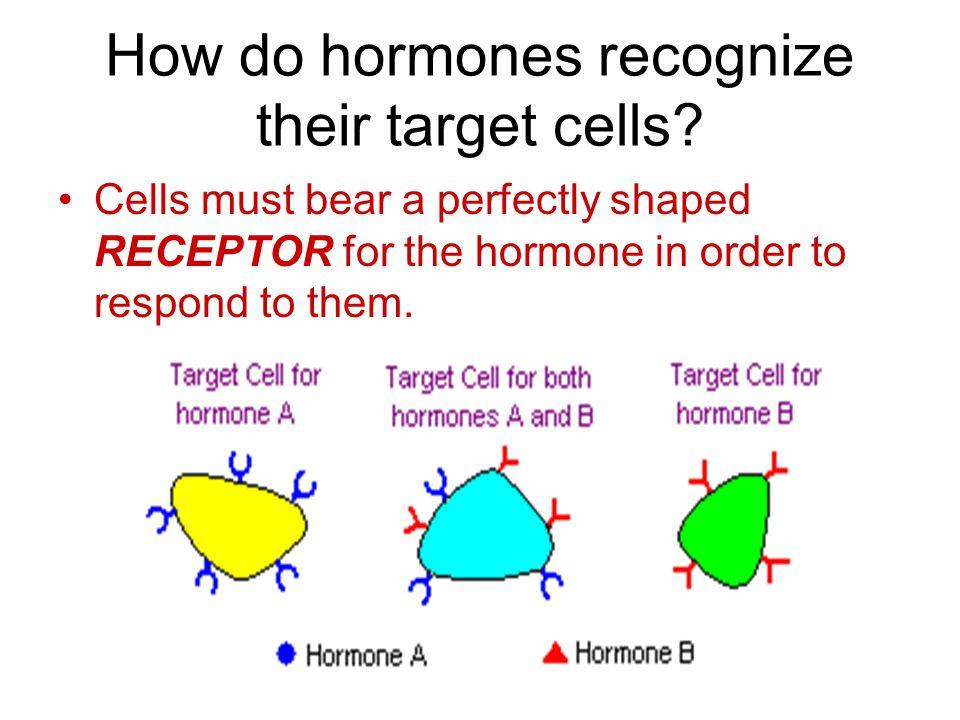 How do hormones recognize their target cells