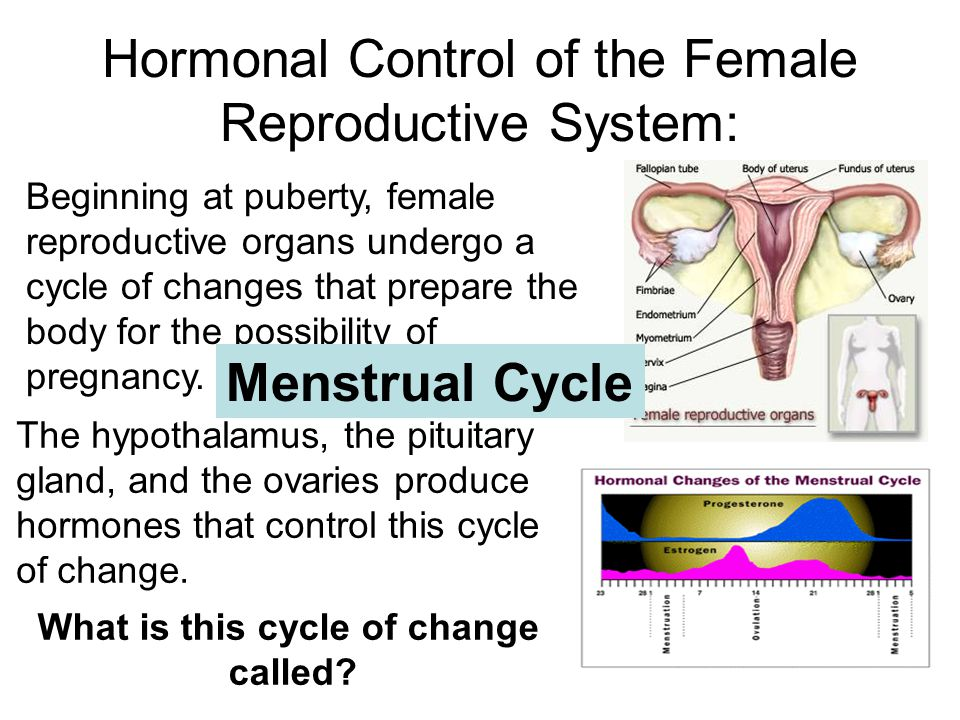 Hormonal Control of the Female Reproductive System: