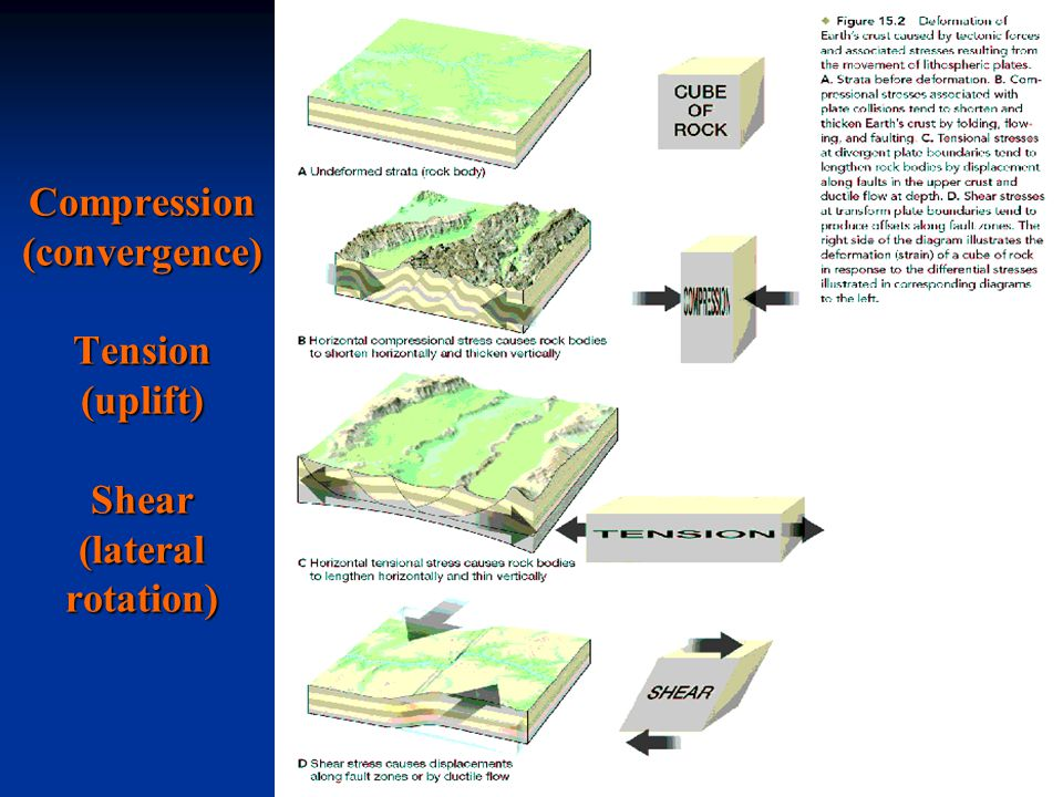 Compression (convergence) Tension (uplift) Shear (lateral rotation)