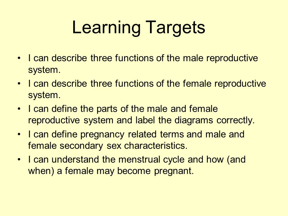 Human reproductive system ppt video online download learning targets i can describe three functions of the male reproductive system i can describe ccuart Image collections