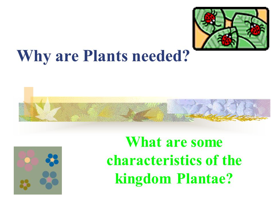 What are some characteristics of the kingdom Plantae