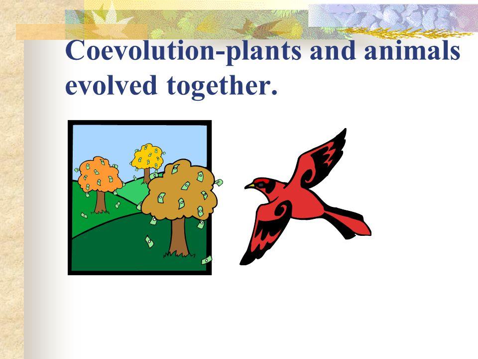 Coevolution-plants and animals evolved together.