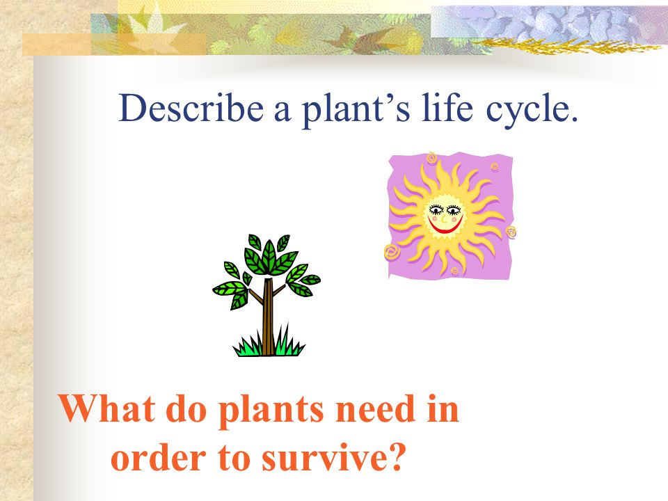 What do plants need in order to survive