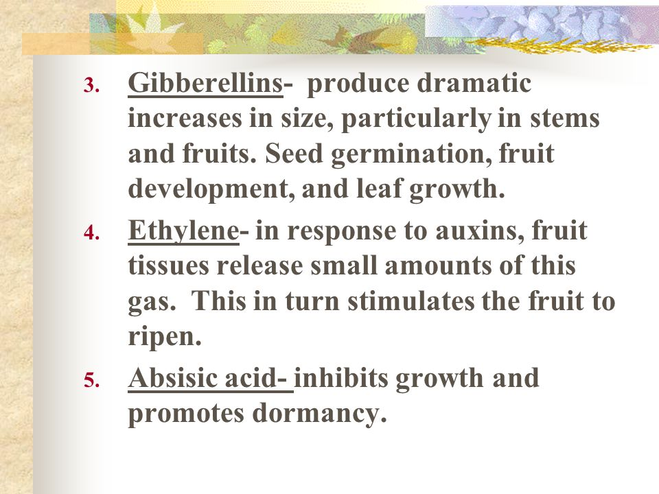 Gibberellins- produce dramatic increases in size, particularly in stems and fruits. Seed germination, fruit development, and leaf growth.