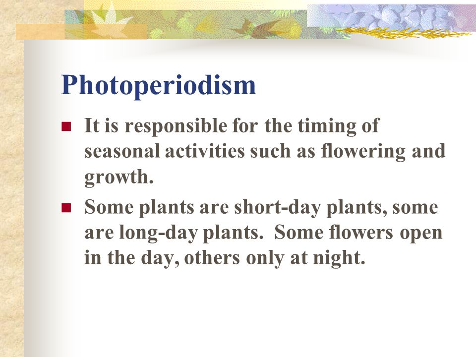 Photoperiodism It is responsible for the timing of seasonal activities such as flowering and growth.