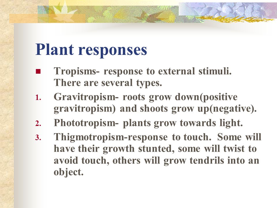 Plant responses Tropisms- response to external stimuli. There are several types.