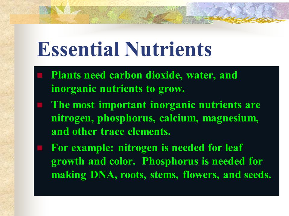 Essential Nutrients Plants need carbon dioxide, water, and inorganic nutrients to grow.