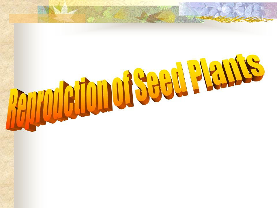 Reprodction of Seed Plants