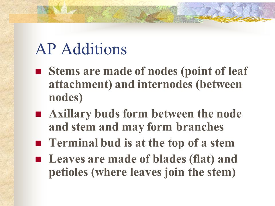 AP Additions Stems are made of nodes (point of leaf attachment) and internodes (between nodes)