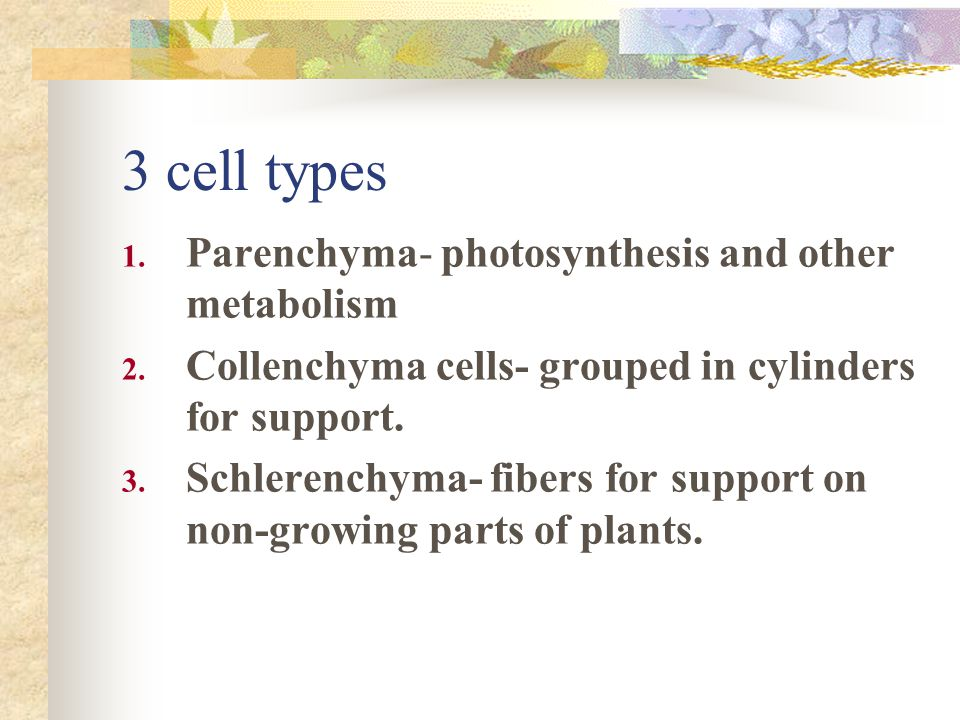 3 cell types Parenchyma- photosynthesis and other metabolism