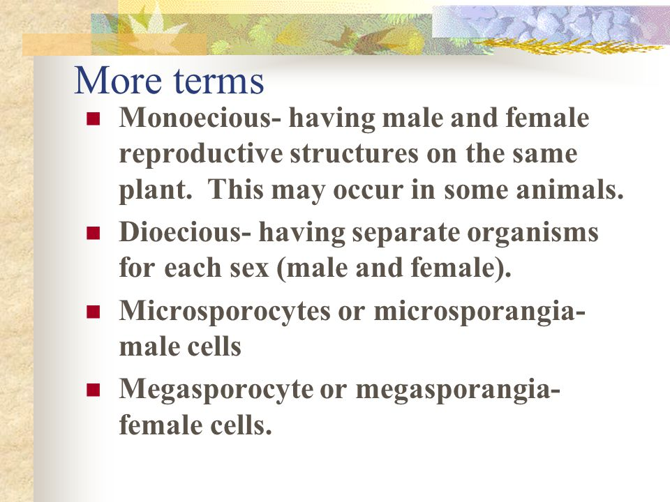 More terms Monoecious- having male and female reproductive structures on the same plant. This may occur in some animals.