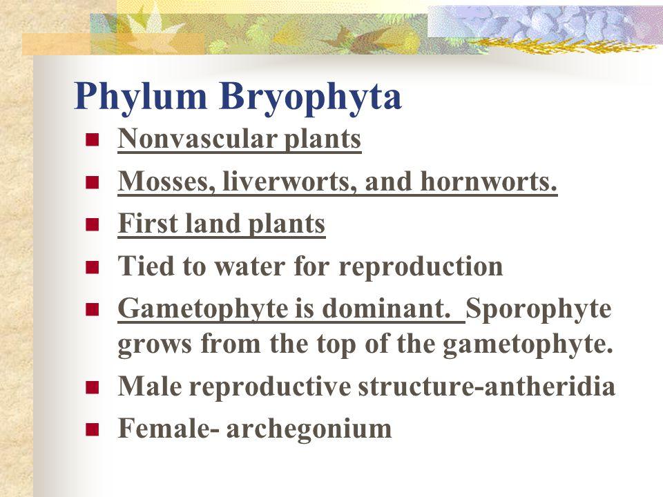 Phylum Bryophyta Nonvascular plants Mosses, liverworts, and hornworts.