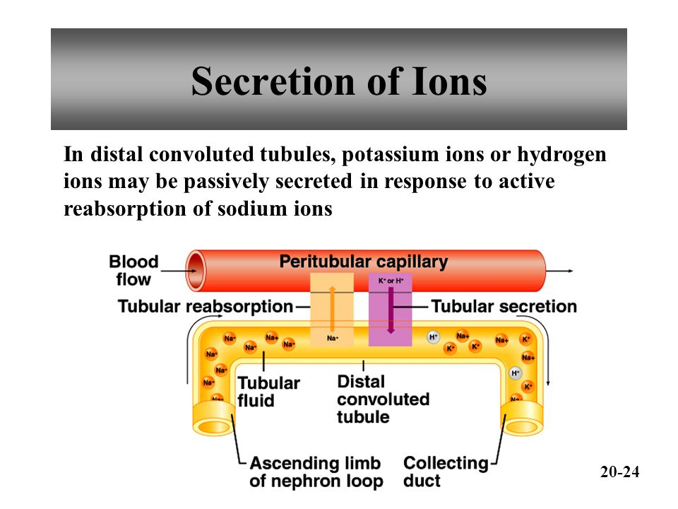 Secretion of Ions