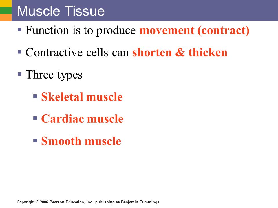 Muscle Tissue Function is to produce movement (contract)