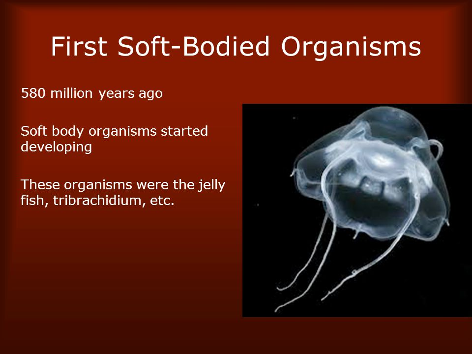 First Soft-Bodied Organisms