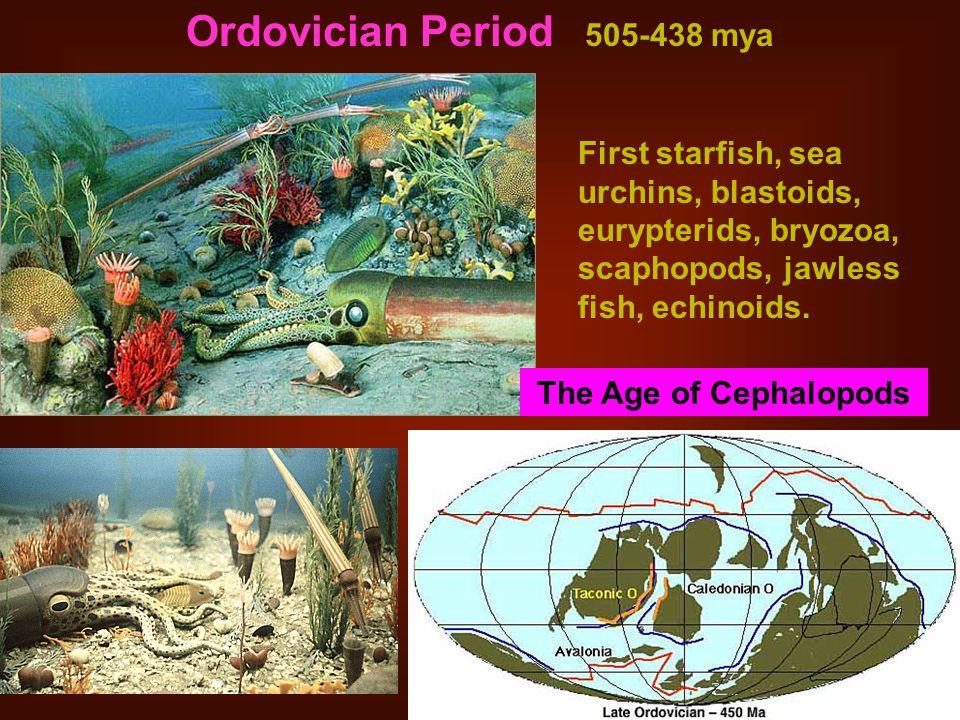 Ordovician Period 505-438 mya