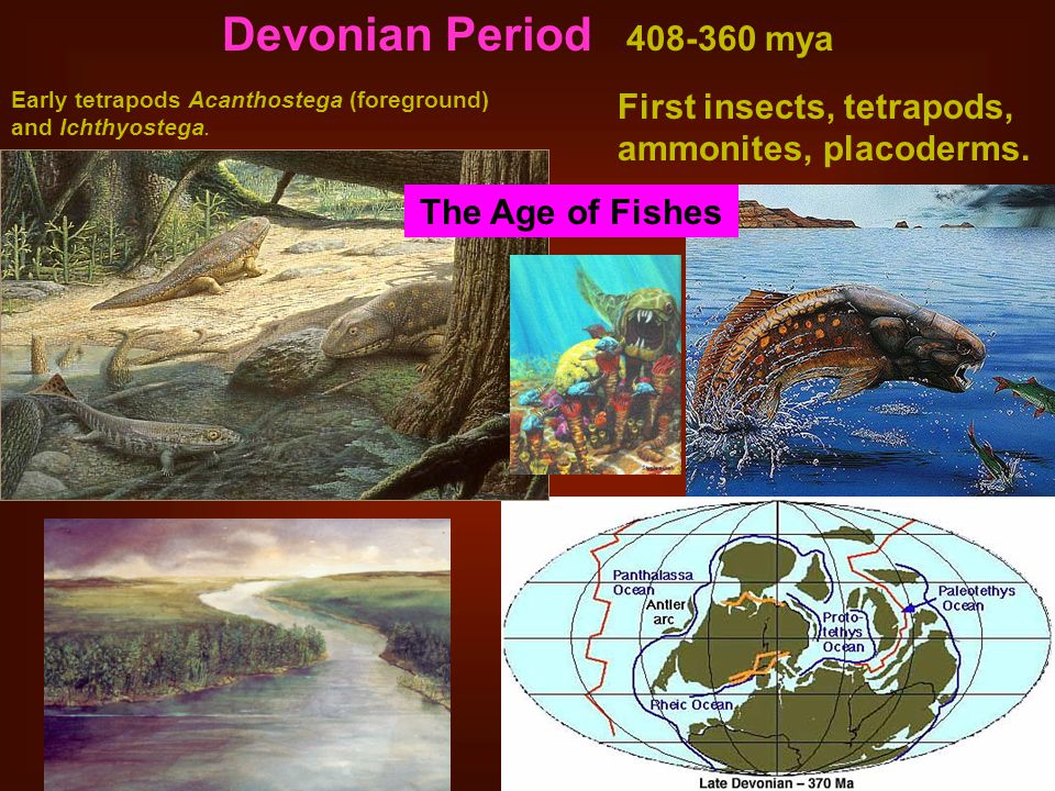 Devonian Period 408-360 mya Early tetrapods Acanthostega (foreground) and Ichthyostega. First insects, tetrapods, ammonites, placoderms.