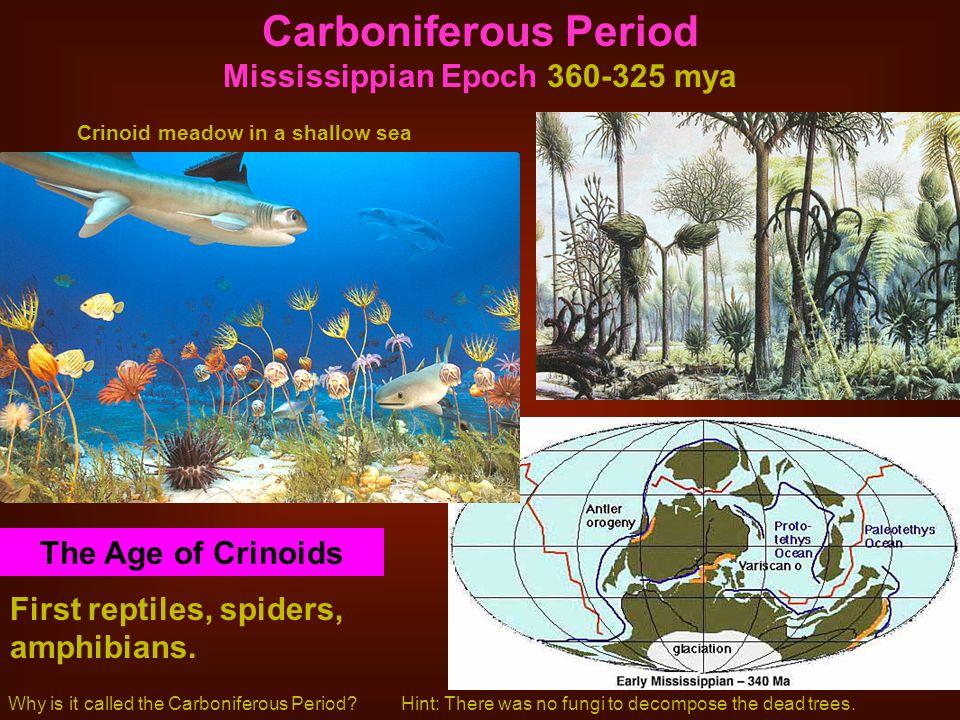 Carboniferous Period Mississippian Epoch 360-325 mya