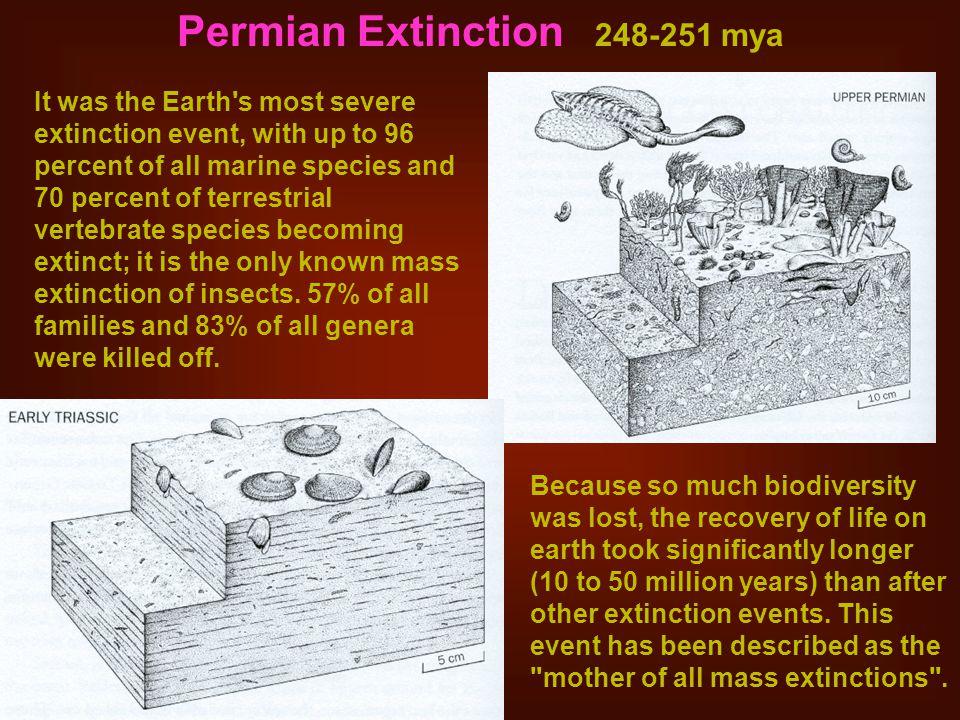 Permian Extinction 248-251 mya