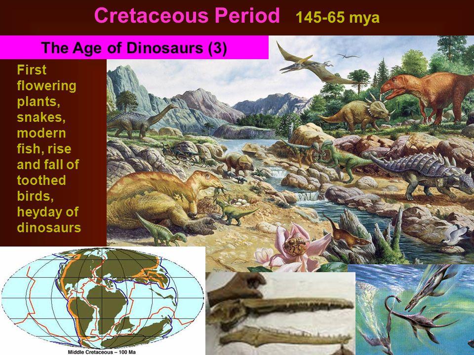 Cretaceous Period 145-65 mya
