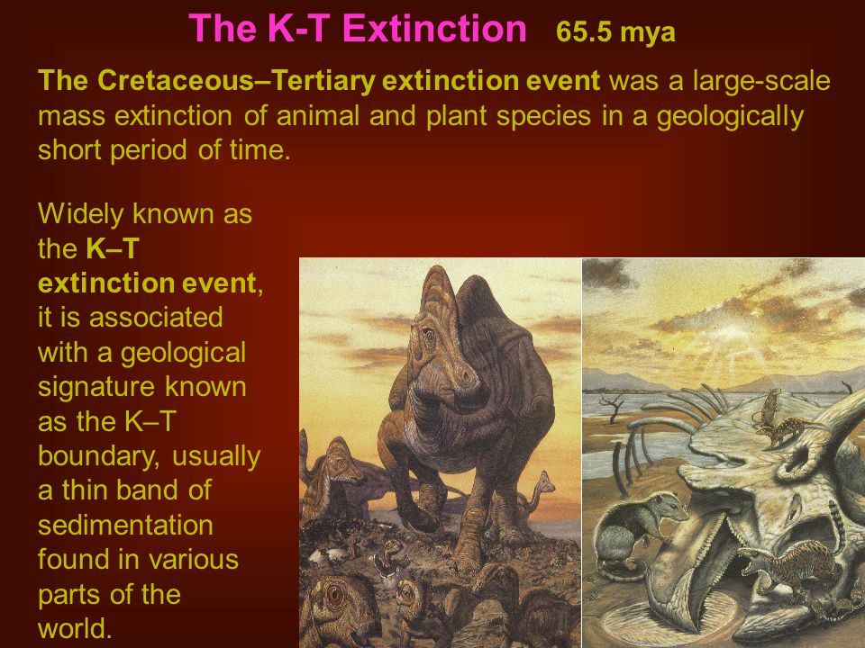 The K-T Extinction 65.5 mya