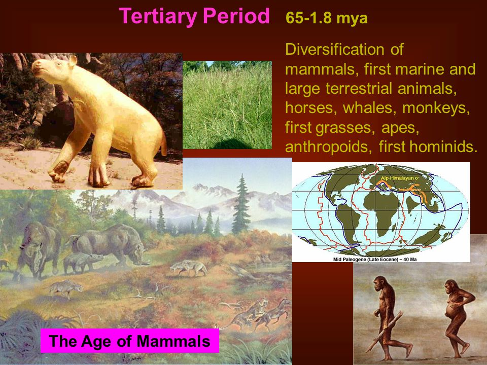 Tertiary Period 65-1.8 mya